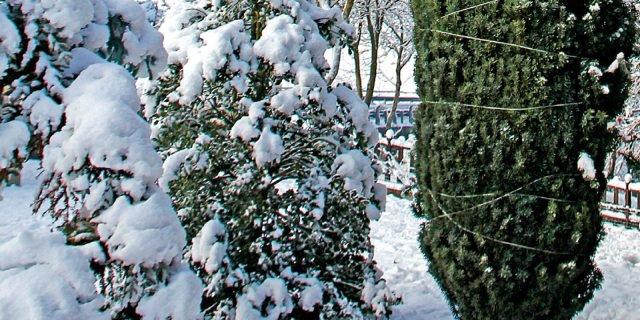 Proteggere le piante dalla neve