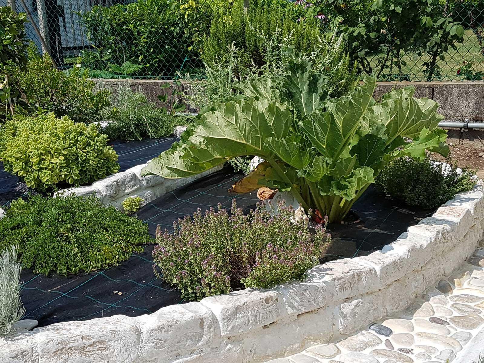 Aiuola per erbe aromatiche cose di casa for Concime per gerani fatto in casa