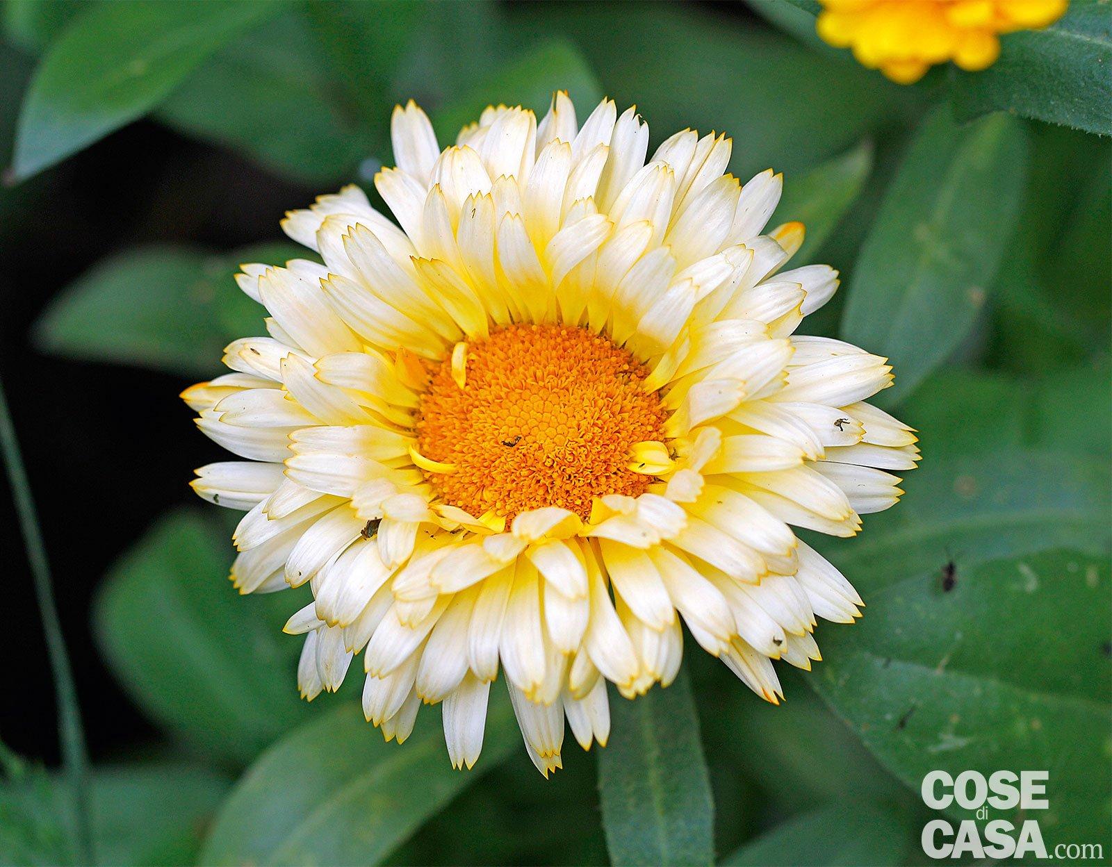Vivaio Margine Rosso : Le piante fiorite più belle da acquistare adesso cose di casa