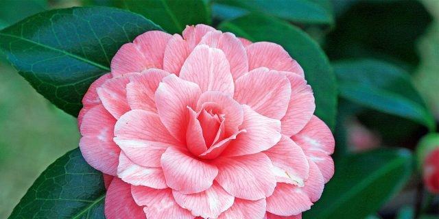 Le piante fiorite più belle da acquistare adesso