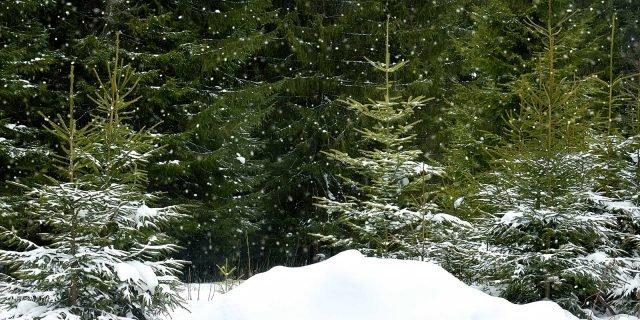 Lotta invernale ai parassiti delle piante cose di casa for Piante secche ornamentali