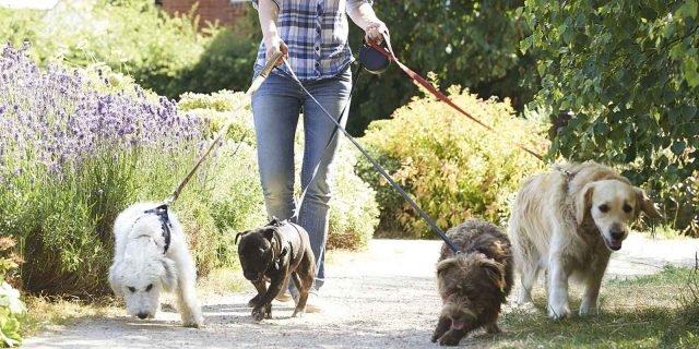Cane e gatto: trovare un pet sitter