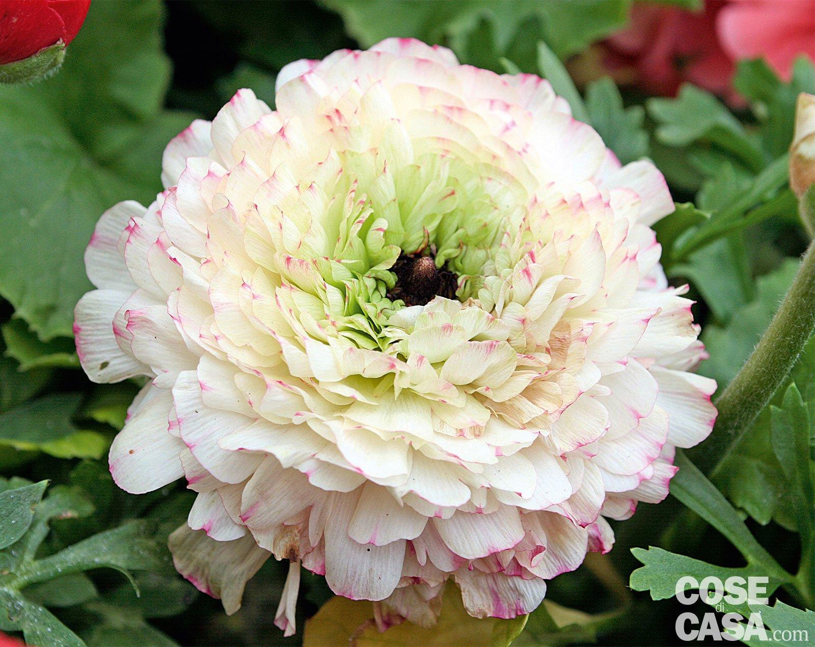 Le piante fiorite pi belle da acquistare adesso cose di for Piante belle da giardino