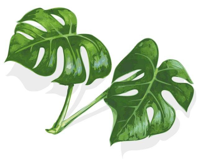 Moltiplicare per talea di foglia le piante da interni ...