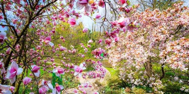 La fioritura più bella d'Italia 2017