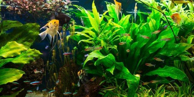 L'acquario di acqua dolce