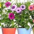 piante fiorite a marzo
