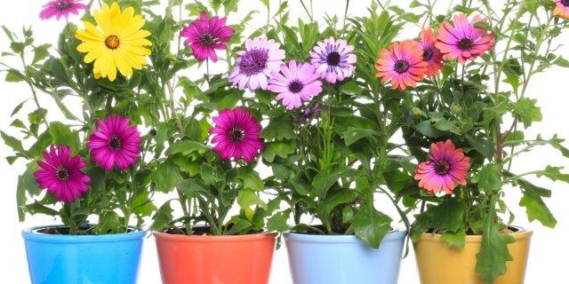 Le piante fiorite a marzo per vasi e cassette