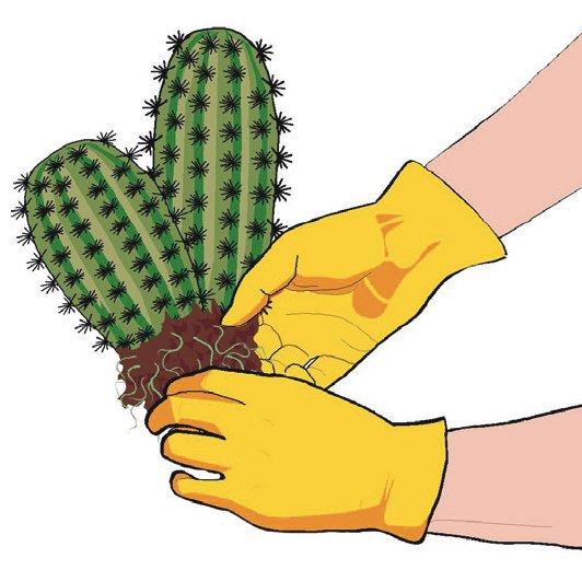 3. Appoggiare la pianta da rinvasare su un lato e sfilare il vaso. Districare le radici allargandole delicatamente.