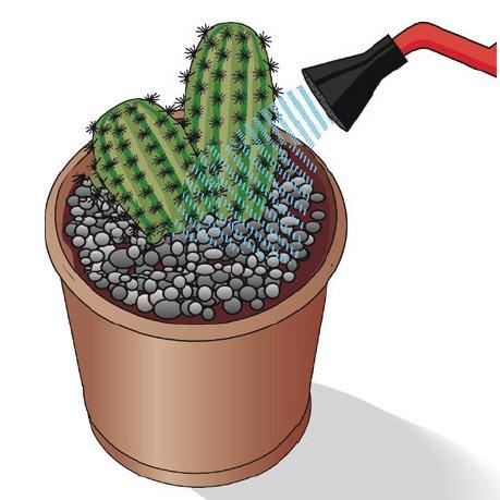 4. Tenendo la pianta per la cima, metterla nella cavità lasciata libera. Raddrizzarla e aggiungere altro terriccio se necessario. Poi pressare il terriccio, cospargere con una copertura di sassolini e annaffiare copiosamente.