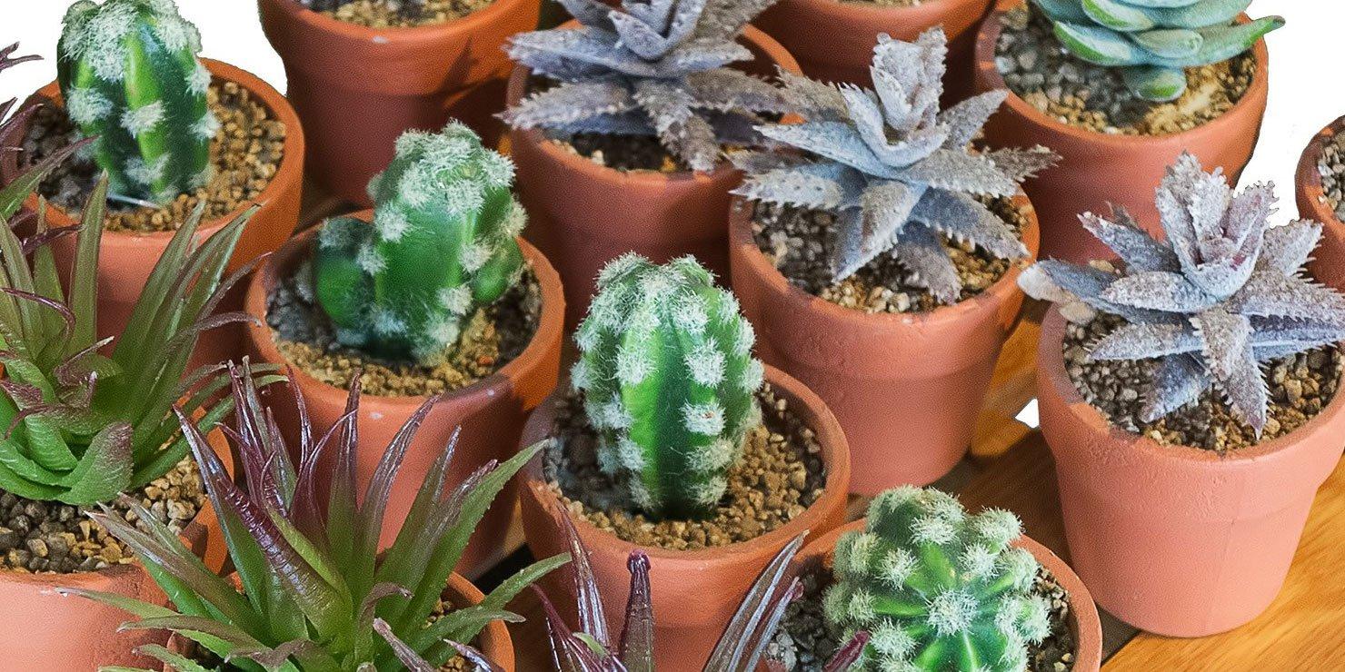 Succulente cose di casa for Curare le piante