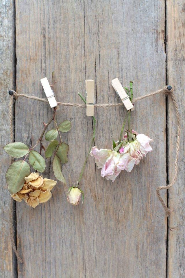 fig 14 fiori da seccare