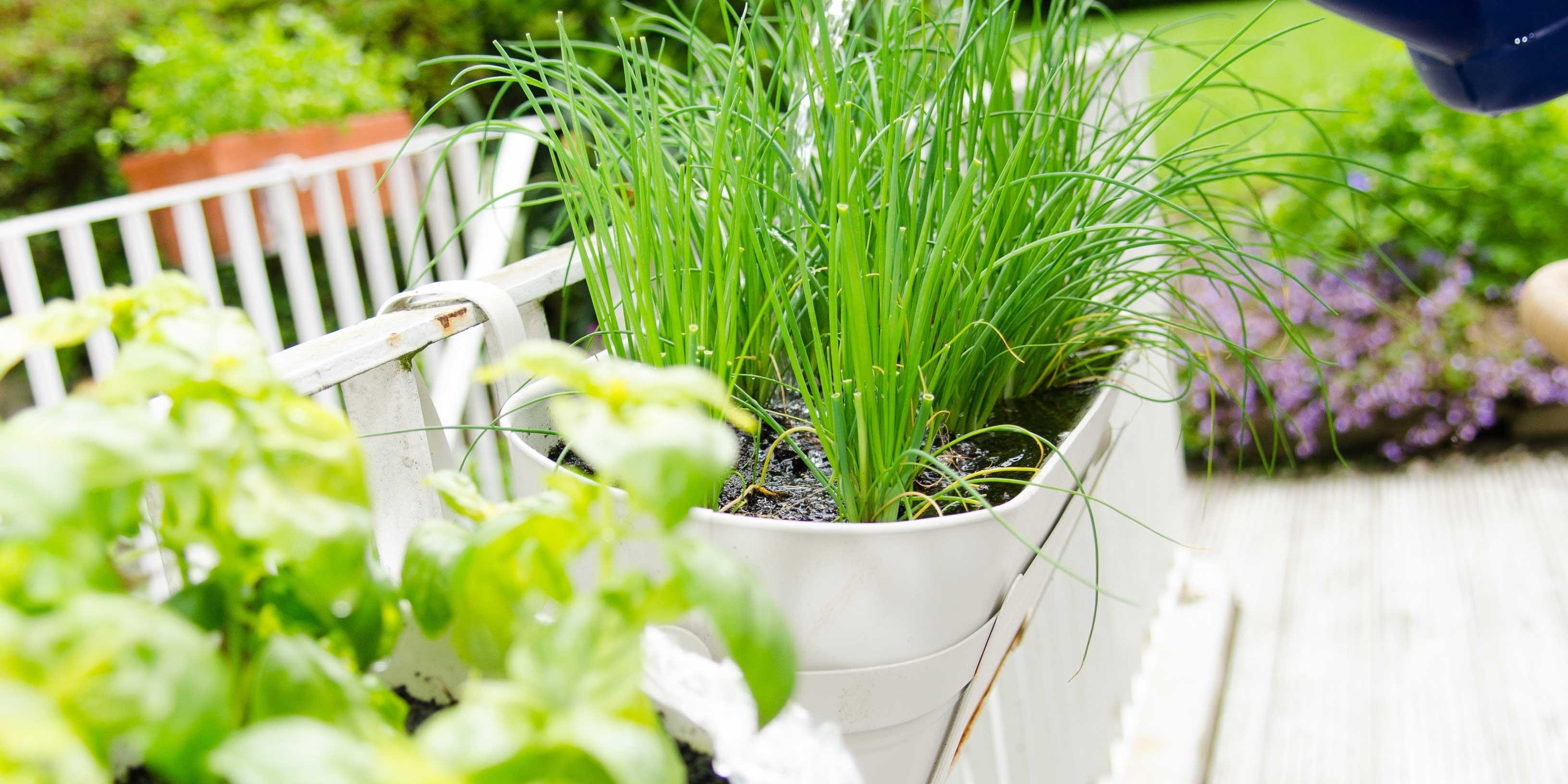 Allestire l impianto di irrigazione cose di casa - Irrigazione balcone ...