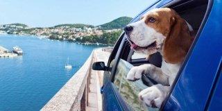 cane d'estate