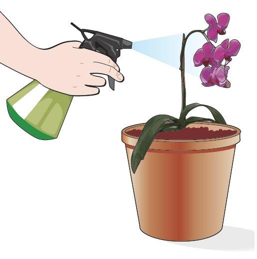 4. Successivamente non bagnare l'apparato radicale per una settimana/dieci giorni. Limitarsi a nebulizzare l'acqua sull'apparato fogliare due volte al giorno mantenendo alto il grado di umidità intorno alla pianta. Si lasci il vaso in una posizione di penombra e non si eseguano concimazioni di alcun genere fino alla ripresa dell'attività radicale da parte della pianta.