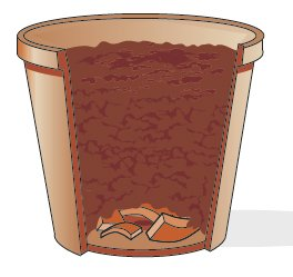 3. Si prepari sul fondo del nuovo vaso uno strato drenante con pezzetti di coccio che consentano all'acqua di fuoriuscire agevolmente e non creare ristagno idrico. Poi si riempia con il substrato acquistato (o con i mix in commercio, come indicato) che risulti sia drenante che ben ossigenato.