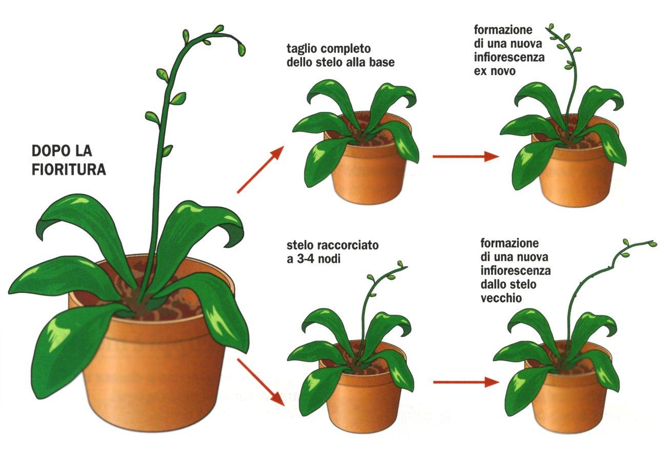 Curare le orchidee sfiorite - Cose di Casa