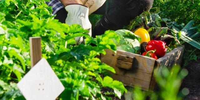 Nell'orto, raccolti per tutta la stagione