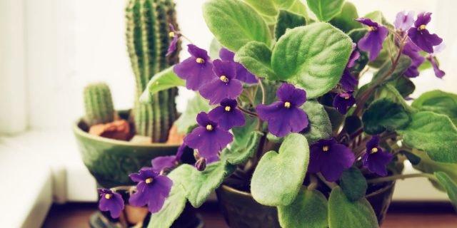 Proteggere dal caldo estivo le piante d'appartamento