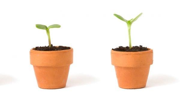 Fai da te: nuova vita ai vecchi vasi di terracotta