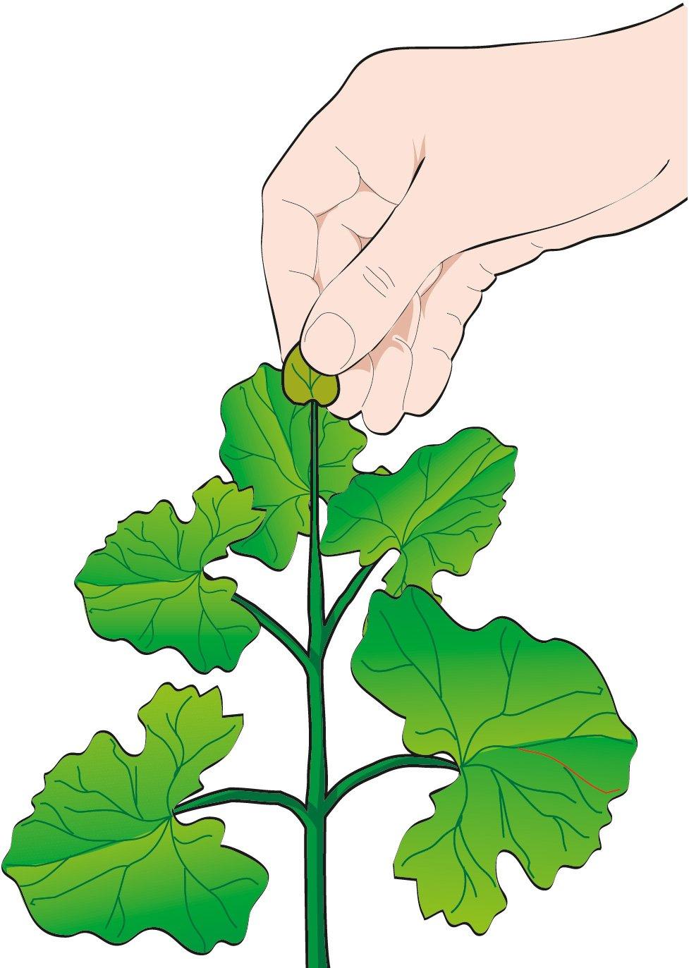 Il melone si pu coltivare nell orto cose di casa for Melone coltivazione