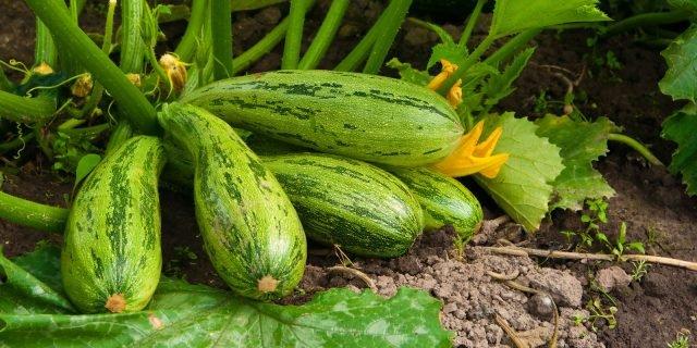 Le giuste cure per gli ortaggi di stagione
