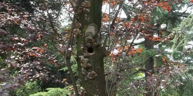 Il picchio se lavora sul tronco…