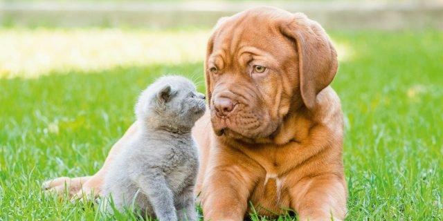 Cane e gatto: l'alimentazione estiva