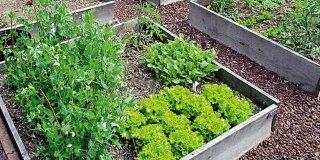Ortaggi da piantare in seconda coltivazione