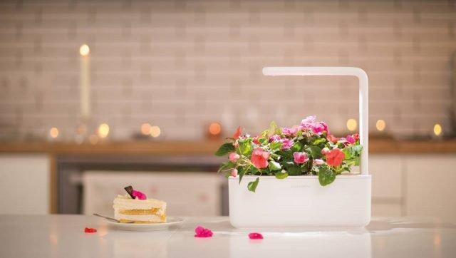 Il Click & Grow Smart Garden 9 è un innovativo mini-giardino da interno che permette di coltivare in casa frutta fresca, verdure, erbe aromatiche, insalate e fiori senza alcuna difficoltà. Include luci a LED a pieno spettro, misura automaticamente il livello ottimale di acqua e luce necessaria per le piante e assicura che le piante abbiano abbastanza sostanze nutritive e ossigeno attraverso il  sistema brevettato Smart Soil, che mantiene i livelli di ossigeno, acqua, pH e gli ingredienti nutrizionali di ogni pianta ad un livello ottimale. Smart Garden 9 consente di coltivare piante che contengono fino a 60% di vitamine e crescono 30% più veloce delle piante coltivate con i metodi agricoli attuali. Il prezzo base è di 129 dollari ed è possibile sottoscrivere degli abbonamenti a partire da 59,95 dollari per le ricariche e le capsule vegetali sono vendute separatamente a 19,95 dollari per la confezione da 3. www.clickandgrow.com