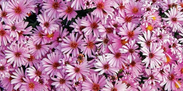 I fiori autunnali scelti per voi