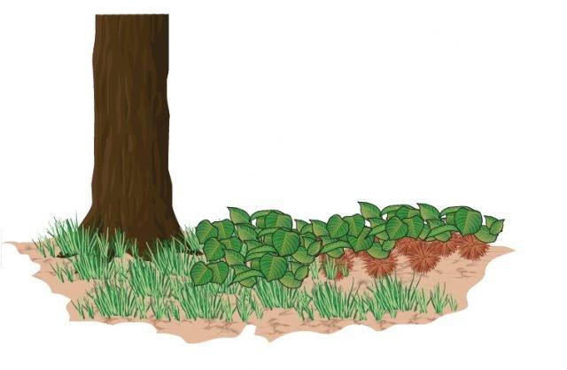 La ricciaia Chi ha i castagni in giardino, può ricorrere a questo antico metodo per conservare le castagne: lasciarle nel terreno senza estrarle dai ricci ricoprendole di foglie e terra. Al momento del bisogno si vanno a recuperare.
