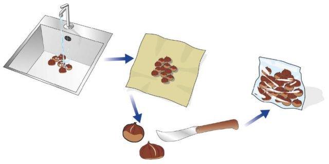 La surgelazione Dopo averle lavate e controllate con cura per scartare eventuali gusci danneggiati, devono essere asciugate, incise sul dorso e chiuse dentro un sacchetto da freezer. Una volta congelate si potranno conservare a lungo. Quando estratte dal freezer si potranno cucinare come appena raccolte, in padella o bollite. Per inciderne il guscio si può utilizzare un coltello a punta o uno apposito, un attrezzo speciale, simile a uno schiaccianoci, che al posto delle zigrinature per la frutta secca, abbia un cucchiaino in basso dove posare la castagna, e una lama in alto: azionando i manici la lama imprimerà automaticamente un taglio sul dorso della castagna.