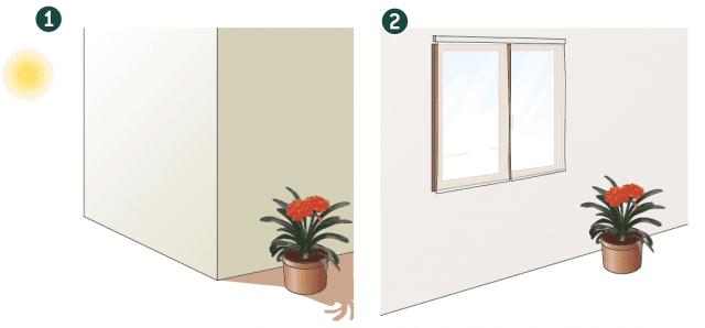 1. In estate, se la temperatura interna è troppo alta, sarà possibile spostarla all'esterno, in una zona ombreggiata o semiombreggiata, dove non sia mai raggiunta dai raggi diretti del sole che potrebbero causare vistose bruciature e allessamenti.  2. Durante l'inverno la clivia in casa va tenuta in una zona luminosa, anche in prossimità di una finestra, dove possa essere raggiunta dalla luce diffusa che penetra attraverso le tende. Attenzione a non tenere la pianta vicino ai termosifoni o a condizionatori d'aria.