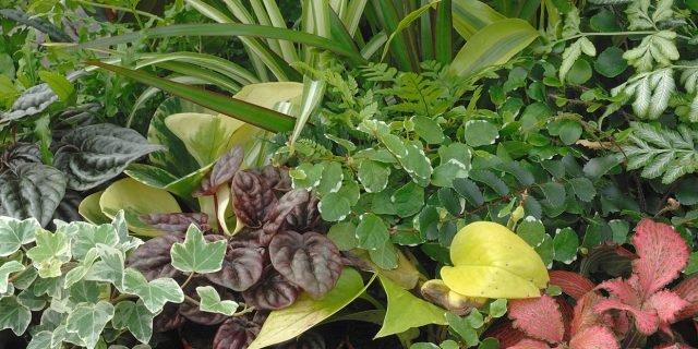 Tre composizioni di piante per il soggiorno