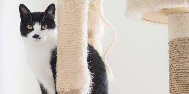 Calendario Eta Gatti.Gatto In Casa Senza Danni Cose Di Casa