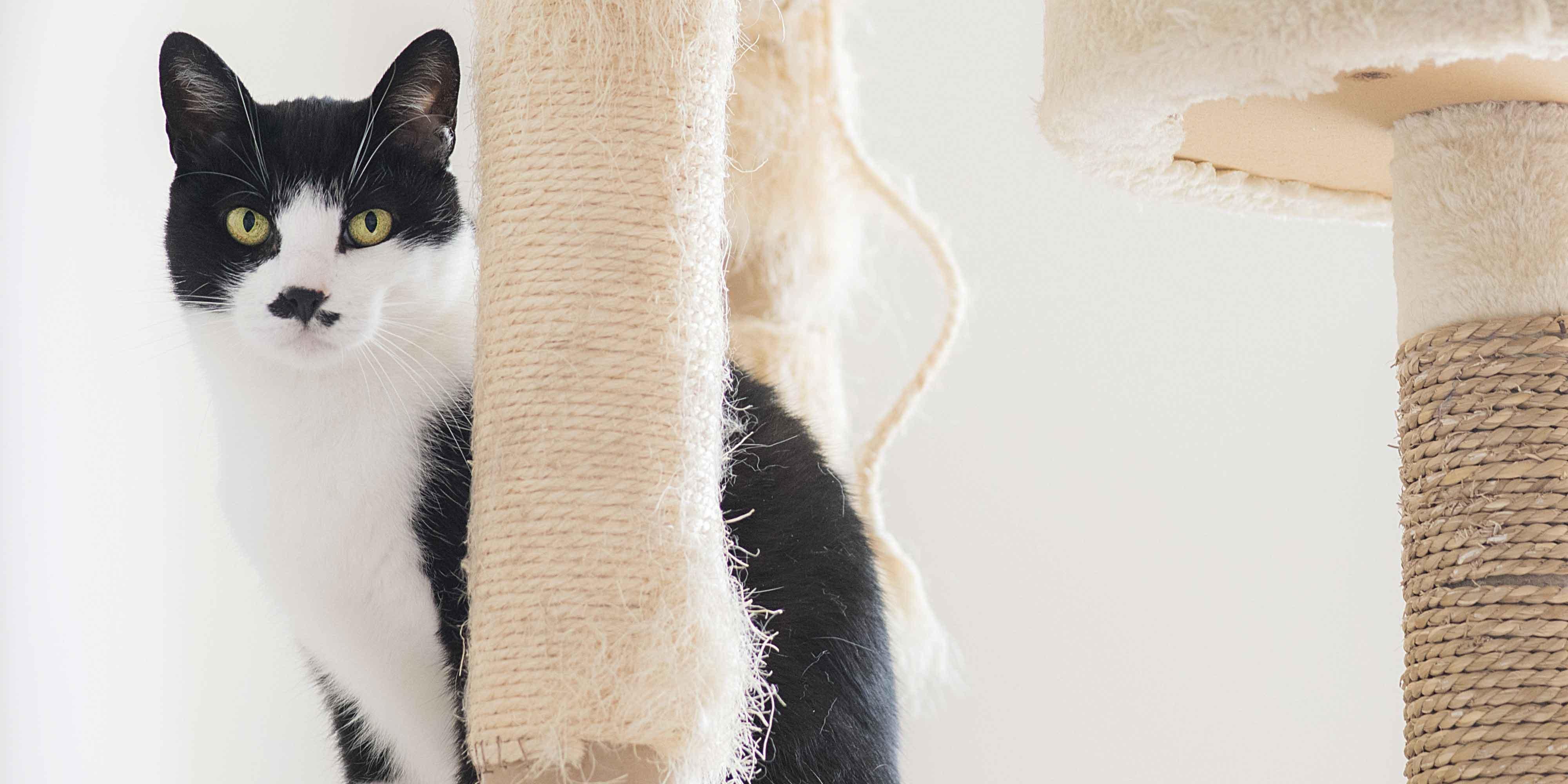 Gatto In Casa Senza Danni Cose Di Casa