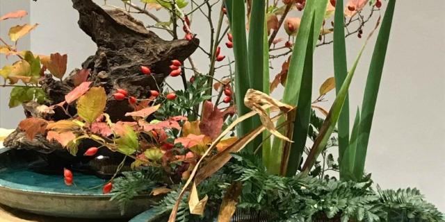 Ikebana più belli