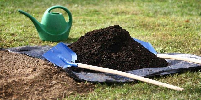 Piantare un cipresso in giardino o nell'orto