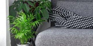 È ora di riportare le piante in casa