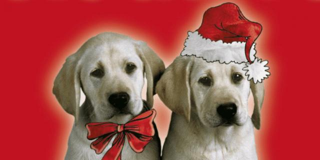 """""""Non siamo giocattoli, non regalarci a Natale"""": campagna contro l'abbandono di cani e gatti"""