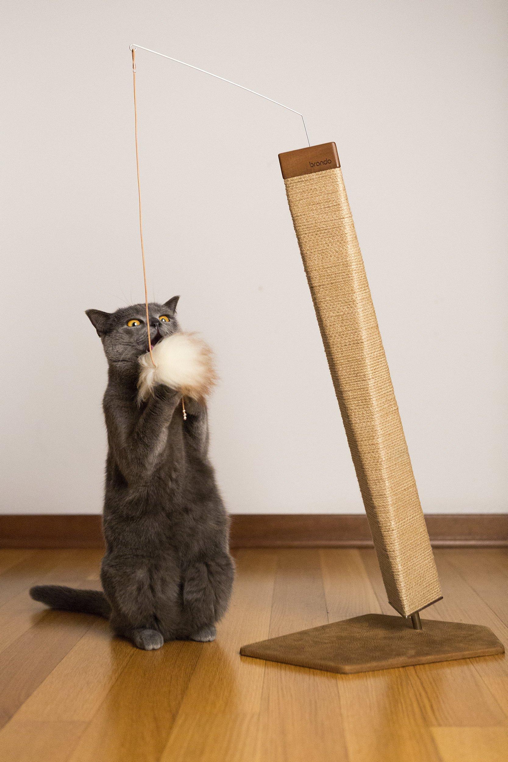 Cuccia Gatto Fai Da Te gatto in casa, senza danni: erba gatta e tiragraffi - cose