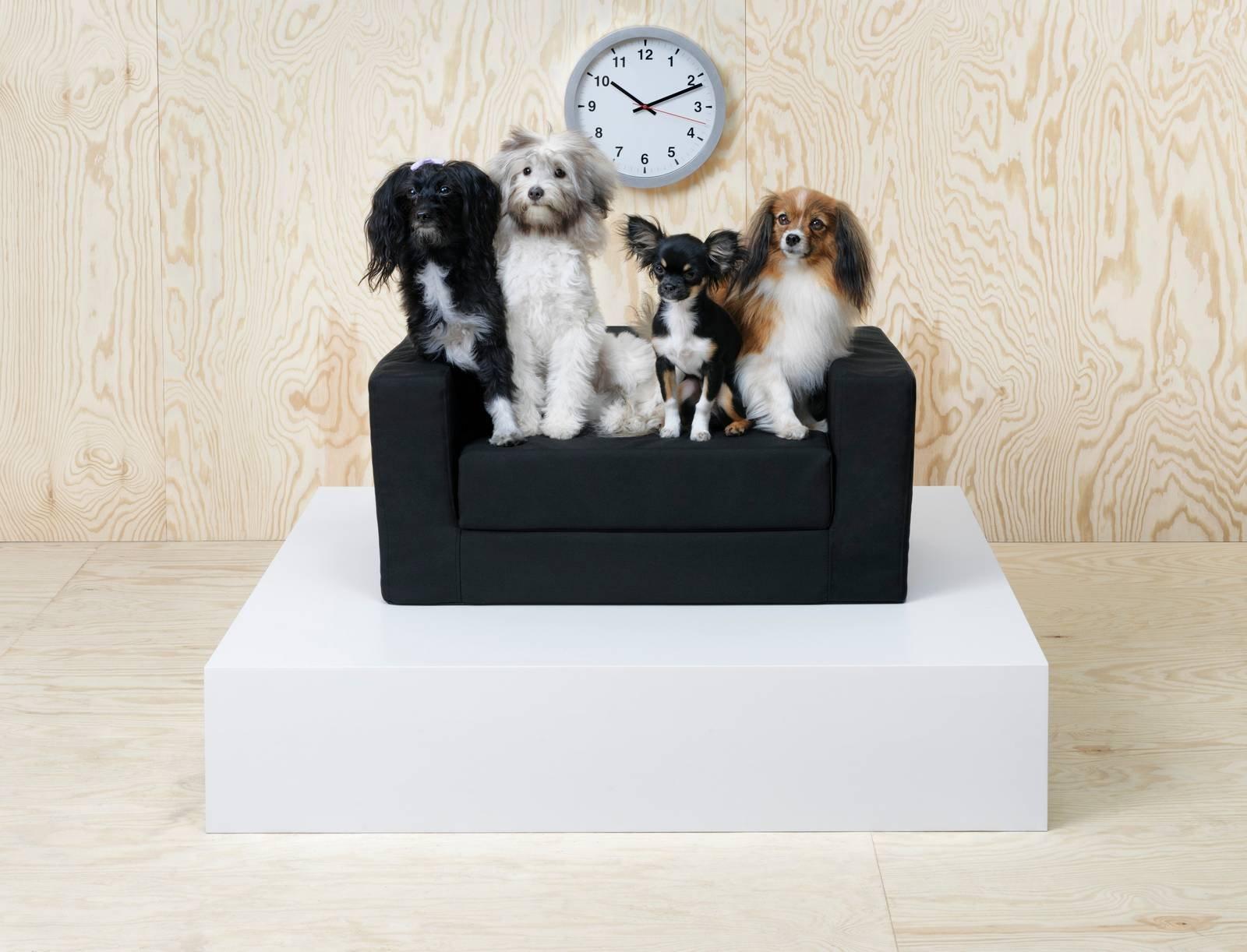 Vasca Da Bagno Per Cani : Una collezione ikea per animali lurvig per i cani e i gatti di