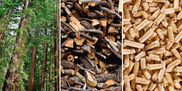 La legna da ardere: guida all'acquisto