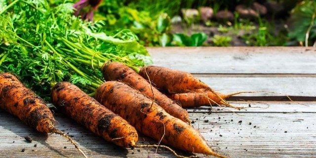 La cura del terreno dell'orto a novembre
