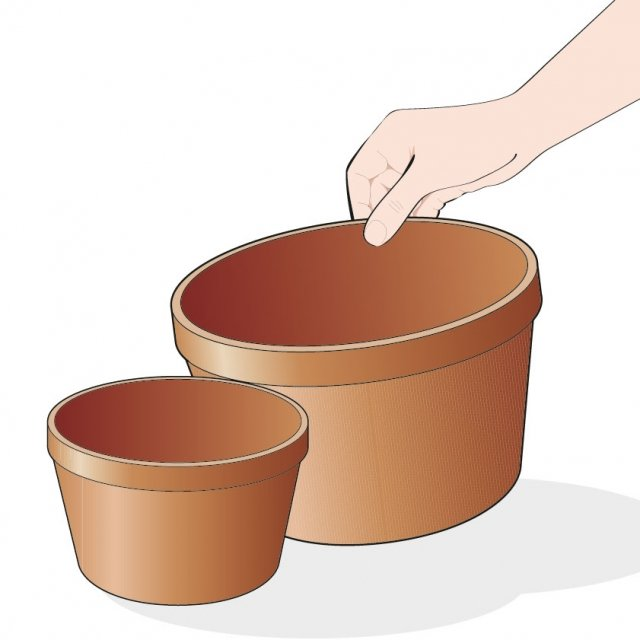 3. Al momento del trapianto, scegliete un vaso con un diametro più grande di almeno 4 centimetri rispetto al precedente.