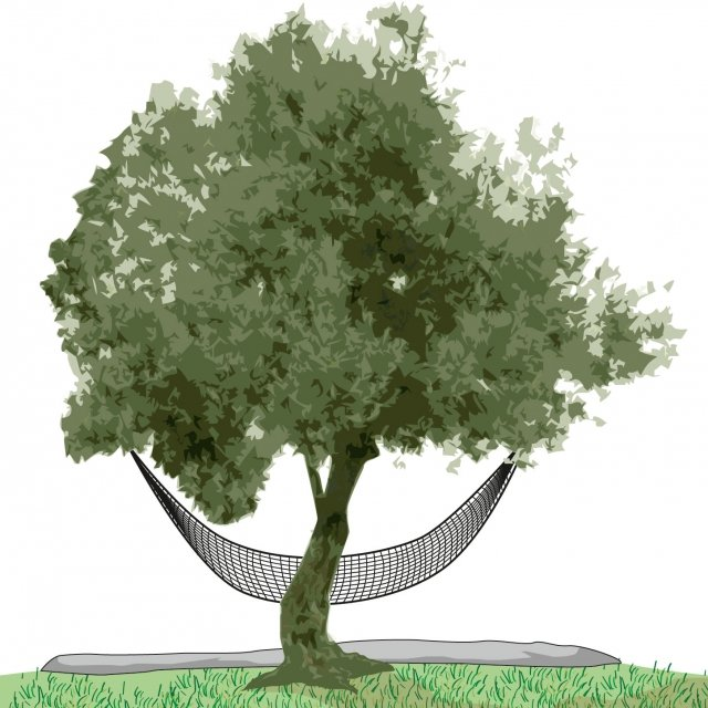 2. Le olive si pongono in un cesto o si lasciano cadere a terra su un telo appositamente adagiato al piede della pianta. L'ideale sarebbe legarli i teli, o le reti, ai rami a una certa altezza dal suolo, in modo che i frutti, cadendo, non impattino il terreno. Quindi si raggruppa il raccolto in cassette o sacchi di iuta in attesa di essere trasportato al frantoio quanto più velocemente possibile. Le olive che non si riescono a raggiungere a mano, possono essere raccolte con l'aiuto di piccoli strumenti montati su aste telescopiche, come rastrelli, mansalde a abbacchitori. Questi strumento sono in grado, grazie ai denti in materiali estremamente morbidi, di separare con delicatezza i frutti dal ramo.
