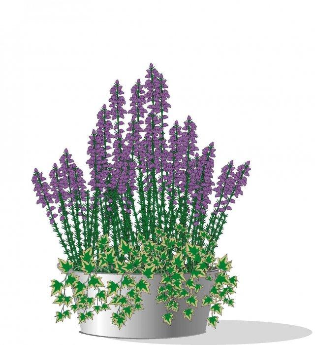 2. In alternativa possiamo accostare qualche vasetto di edera dalle foglie chiare, che ricade dal bordo, all'erica recisa o in piccoli contenitori. Si crea un bellissimo contrasto di colore.