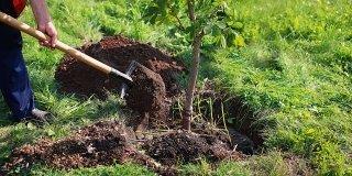 Piantare un albero: adesso è il momento giusto