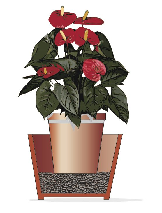 Anthurium la pianta che arreda cose di casa - Aria secca in casa ...